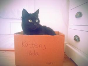 katten-låda