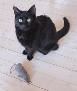 katten-o-musen