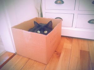 katten-hemlig